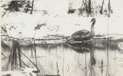 Zimoviště labutí